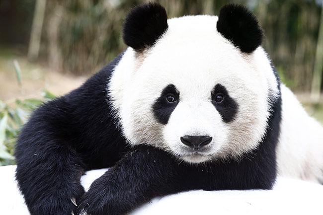 الگوریتم پاندا google panda